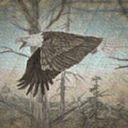 Eagle  In Forest Art Print