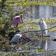 Eagle Lakes Park - Roseate Spoonbill And Friends, Socializing Art Print