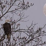Eagle Lookout Art Print