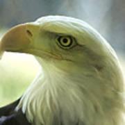 Eagle Majesty Art Print