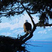 Eagle - Mt Baker - Eagles Nest Art Print