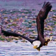 Eagle On A Mission Art Print