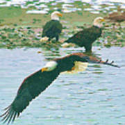 Eagle Over The River Art Print