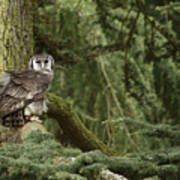Eagle Owl In Forest Art Print