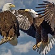 Eagle Pair 3 Art Print