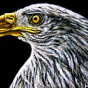 Eagle - Sa96 Art Print