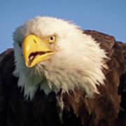 Eagle Stare 2 Art Print