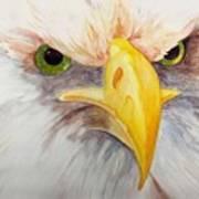 Eagle Stare Art Print