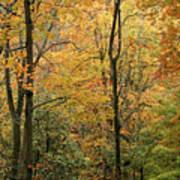 Early Autumn Art Print