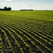 Early Growth Soybean Field Art Print