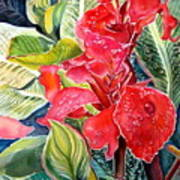 Early Morning Cannas  Art Print