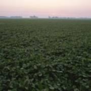 Early Morning Mist Over Soybean Fields Art Print by Brian Gordon Green