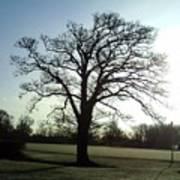 Early Morning Tree In Winter Art Print