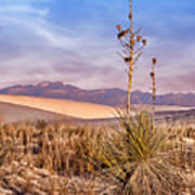 Early Morning Yucca - White Sands - New Mexico Art Print
