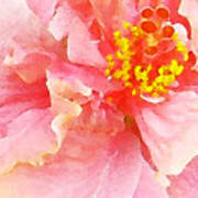 Early Pink Hibiscus Art Print