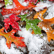 Early Snow During Autumn  Art Print