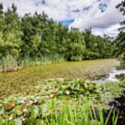 East Cramlington Nature Reserve Art Print