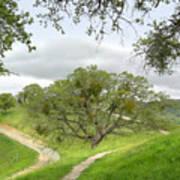 East Ridge Trail -  Spring Art Print