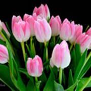 Easter Tulips  Art Print