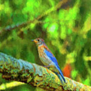 Eastern Blue Bird With Flair Art Print