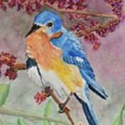 Eastern Bluebird Vertical  Art Print