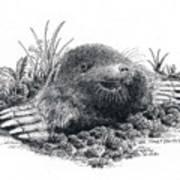 Eastern Mole Art Print