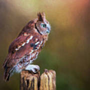 Eastern Screech Owl Red Morph Profile Art Print