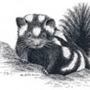 Eastern Spotted Skunk Art Print