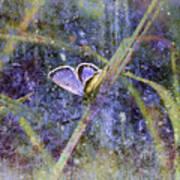 Eastern Tailed Blue Art Print