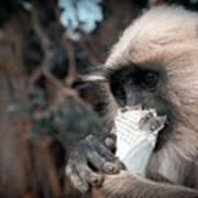 Eating Monkey Art Print