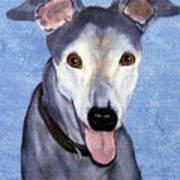 Eddie - Greyhound Art Print