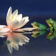 Edible Frog Rana Esculenta Two Frogs Art Print