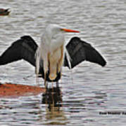Egret And Cormorant Wings Art Print