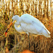 Egret Fishing In Sunset At Forsythe National Wildlife Refuge Art Print