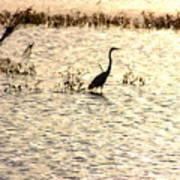 Egret In Sunset Water Art Print