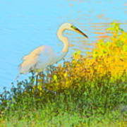 Egret In The Lake Shallows Art Print