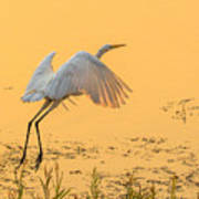 Egret Take Off 3 Art Print