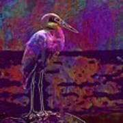 Egret White Bird Beach Wildlife  Art Print