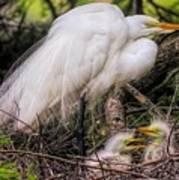 Egrets - 3362 Art Print