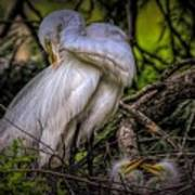 Egrets - 3399 Art Print