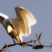 Egrets Landing Art Print