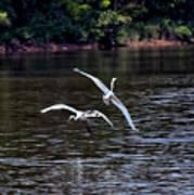 Egrets V Art Print
