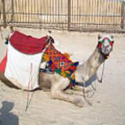 Egypt - Camel Art Print