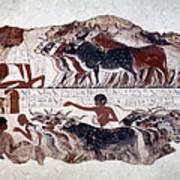Egypt: Tomb Painting Art Print