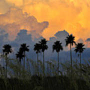 Eight Palms Print by David Lee Thompson