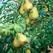 Eight Pears Art Print by Peter Sit