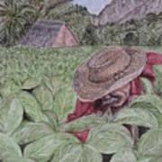 El Campo De Tabaco Art Print