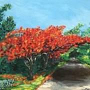 El Flamboyan En Mi Camino Art Print