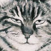 El Gato Art Print