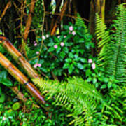 El Yunque National Forest Ferns Impatiens Bamboo Art Print